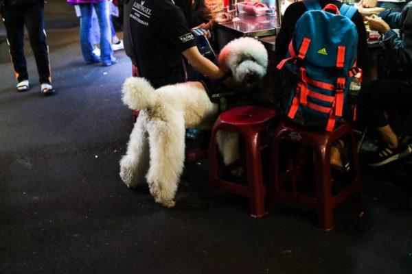 饒河街観光夜市 散歩中の犬