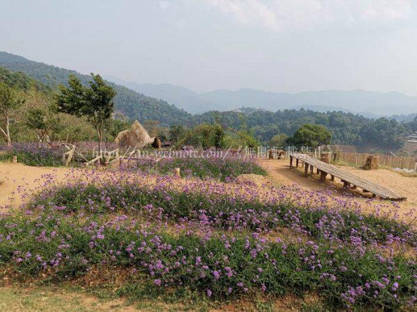 タイ チェンマイ 4月 5月 大気汚染状況 ヘイズ 煙害 野焼き